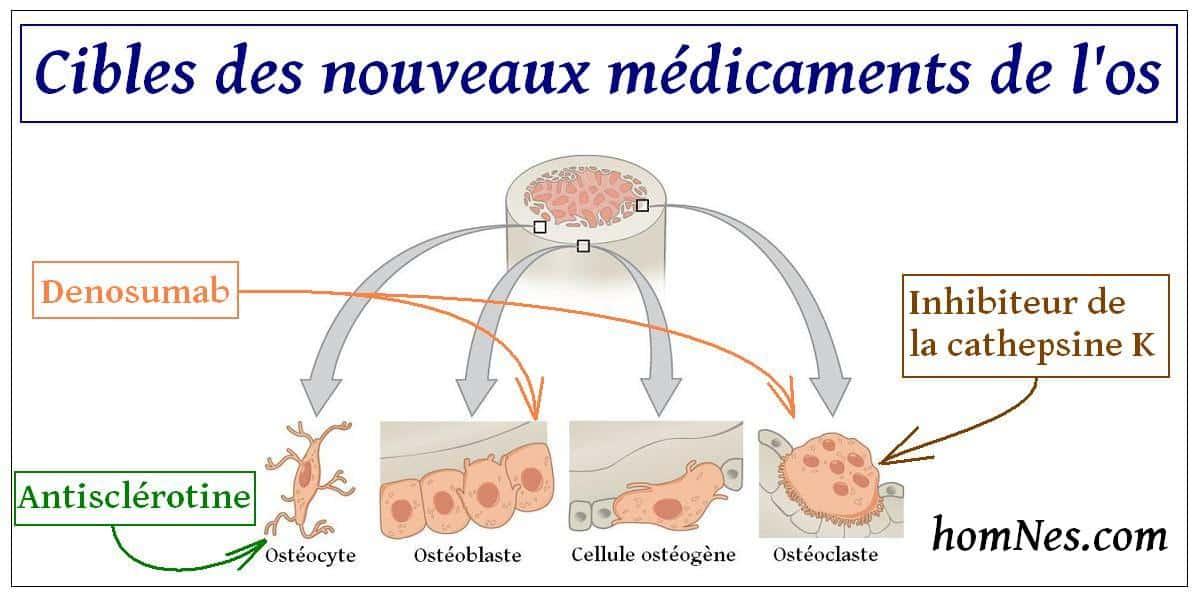 Cibles des nouveaux médicaments de l'os