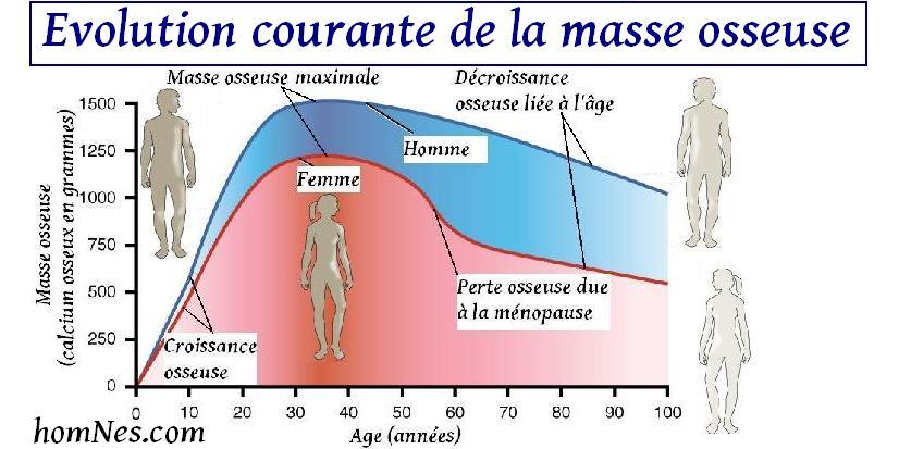 Evolution courante de la masse osseuse