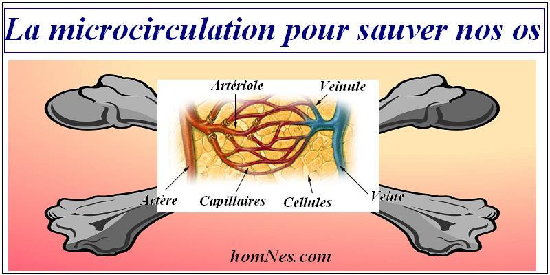 microcirculation et ostéoporose