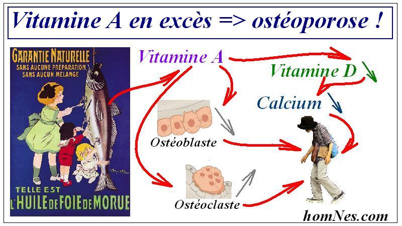 Vitamine A & Ostéoporose - homnes.com