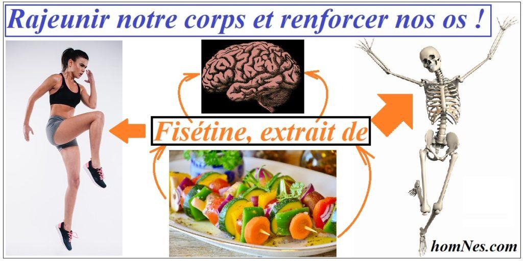 La fisétine : un sénolytique naturel contre l'ostéoporose